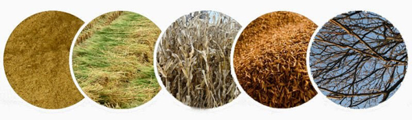biomass fuel raw materials